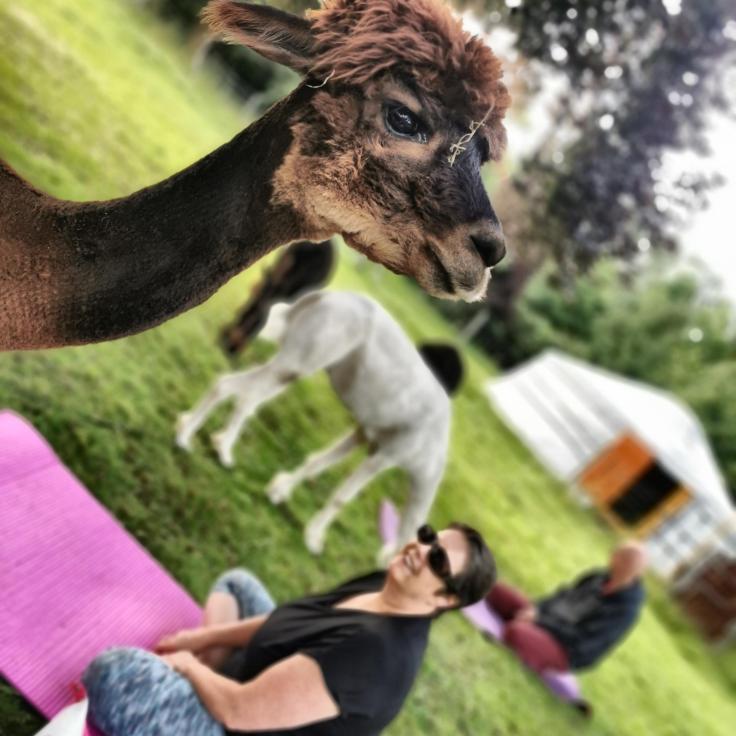 Webseite Alpaka Yoga 1